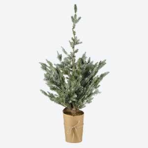 Parlane Christmas Tree Pine Atlanta