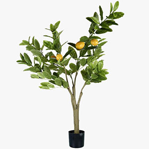 Parlane Lemon Tree