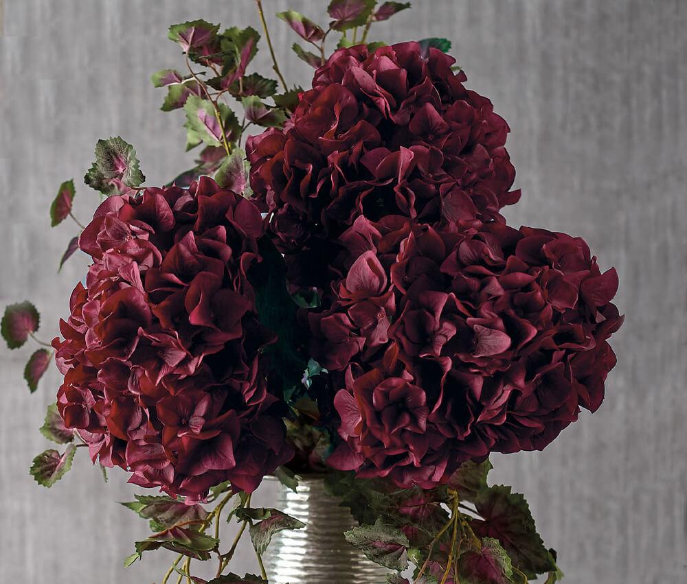 Autumn Winter Flowers - Parlane Hydrangeas in Vase