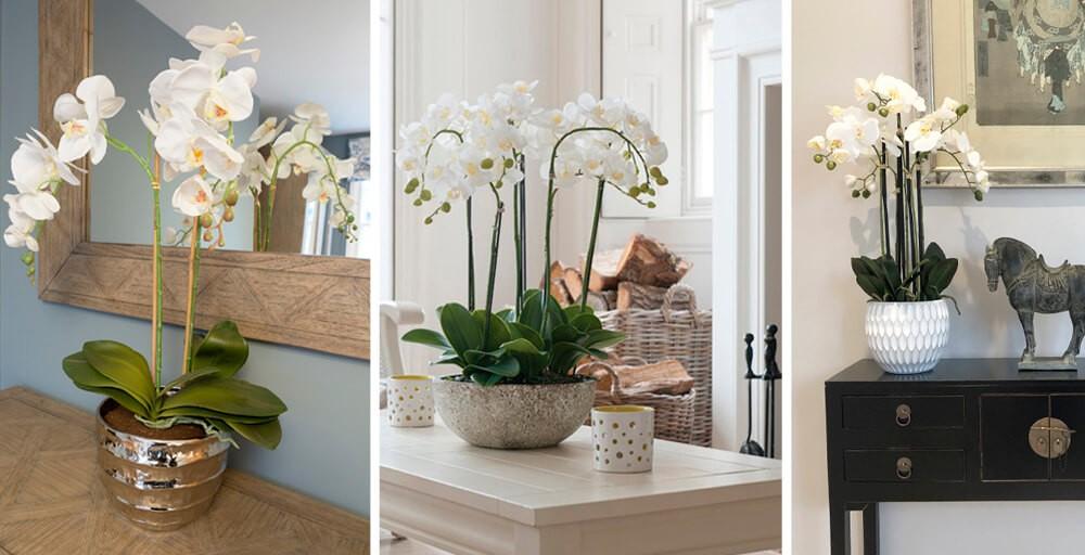 Artificial White Orchid Plants at Pavilion Broadway