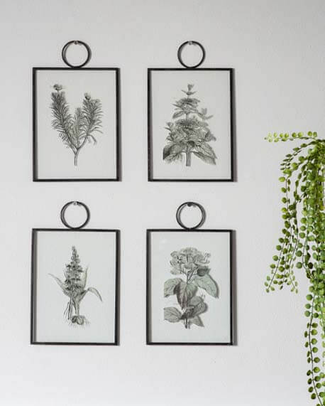 Set of 4 botanical sketch hanging prints on a light wall