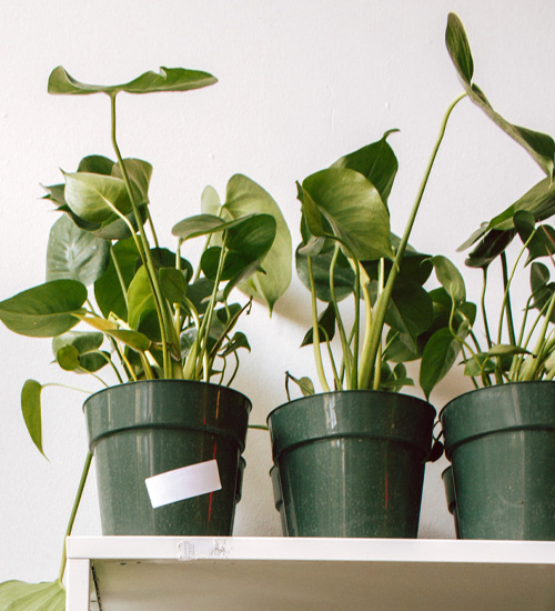 pros and cons of plastic as a plant pot material