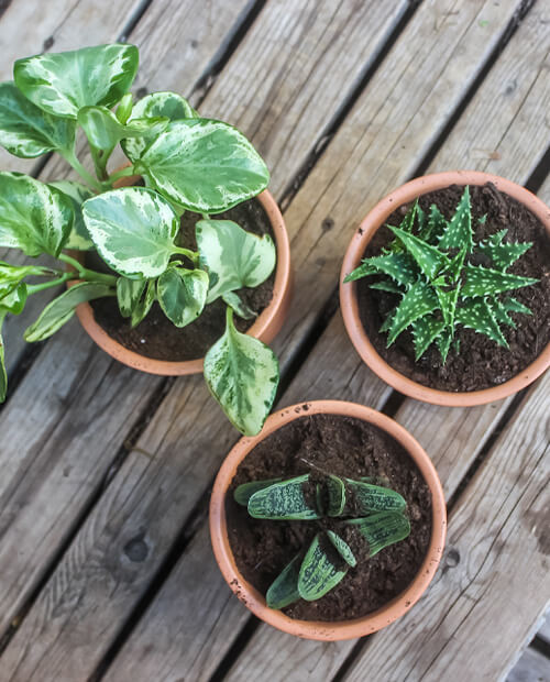 pros and cons of terracotta as a plant pot material