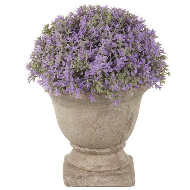 Parlane Dianthus Potted Purple Height 18cm