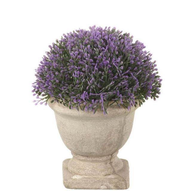 Parlane Heather Potted Purple Height 15cm