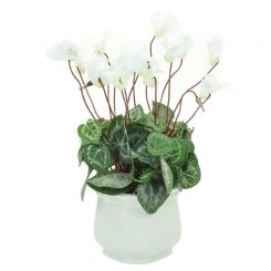 Pavilion Flowers Artificial Cyclamen in Ceramic Pot White Height 27cm