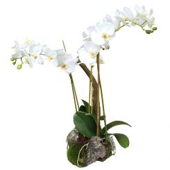 Pavilion Flowers Artificial Phalaenopsis Orchid In Soil And Moss White Height 58cm