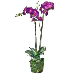 Pavilion Flowers Artificial Phalaenopsis Orchid Purple In Soil And Moss Height 77cm