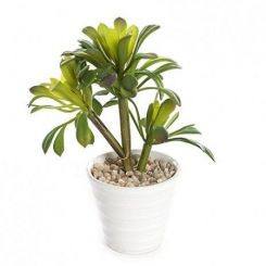 Pavilion Flowers Artificial Potted Succulent In White Pot Height 17cm - A