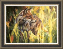 Pavilion Art Fox In Dappled Sunlight by Debbie Boon - Limited Edition Framed Print