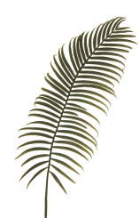 Pavilion Flowers Aritificial Cycas Leaf Green Height 79 Cm