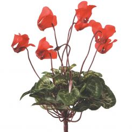 Pavilion Flowers Artificial Cyclamen Bush Red Height 25cm