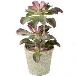 Parlane Echeveria Potted Green/Pink H.40cm