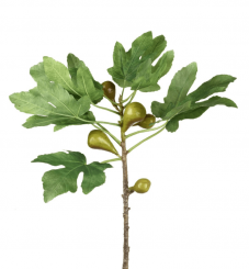 Parlane Fig Branch Green Height 89cm