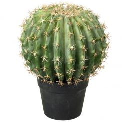 Parlane Melon Cactus Potted Green H.35cm