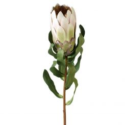 Parlane Protea Stem Green Height 53.5cm