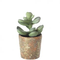 Parlane Succulents Potted Height 12.5cm - A