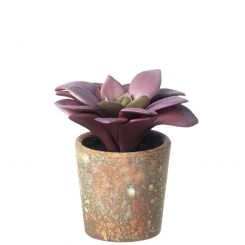 Parlane Succulents Potted Height 12.5cm - B