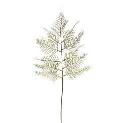 SIA Asparagus Fern Height 60cm