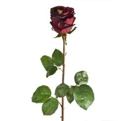 SIA English Rose Bud Dark Red Height 72cm
