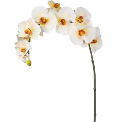 SIA Phalaenopsis Orchid - Light Yellow