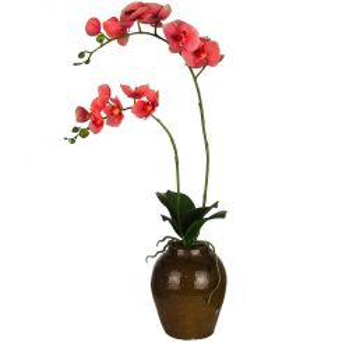 SIA Phaleanopsis Orchid Pink H79cm