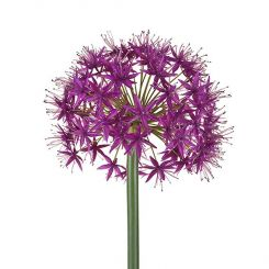 SIA Allium Flower Stem Pink Height 96cm