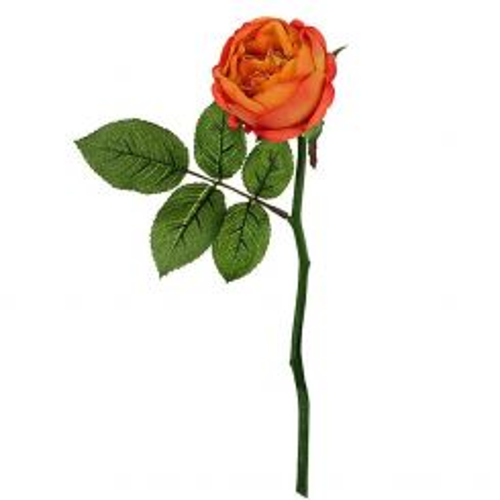 SIA Rose Maria - Bud
