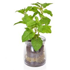Pavilion Flowers Artificial Mint in Glass Jar Green Height 18cm