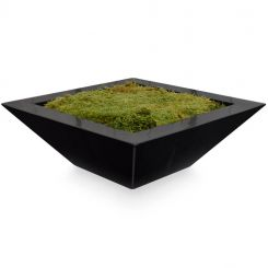 Pavilion Flowers Vase Trapezoid Black with Moss/Oasis Height 12cm