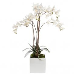 Pavilion Flowers White Artificial Phalaenopsis Cube With Moss Height 82cm