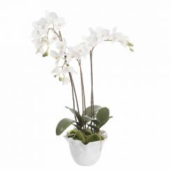 Pavilion Flowers Artificial Phalaenopsis In Crinkle Pot White Height 65cm