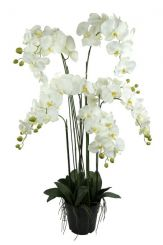 Pavilion Flowers Artificial Phalaenopsis Potted White Height 115cm